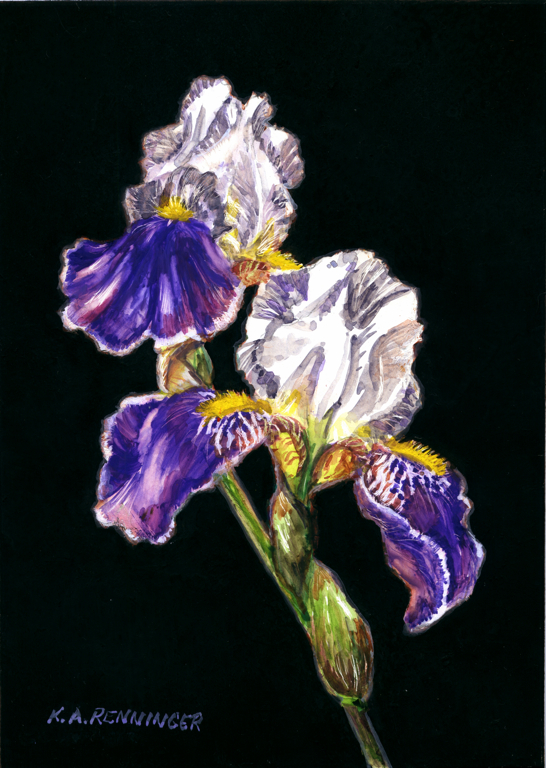 Purple Iris Miniature Painting Still LIfe